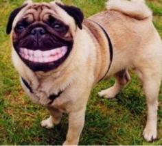 beim zahnarzt lustig